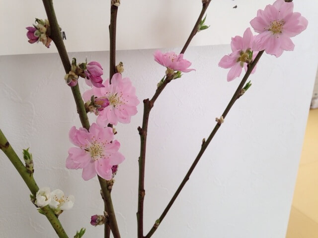 春を感じます~